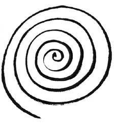 spiral-crop